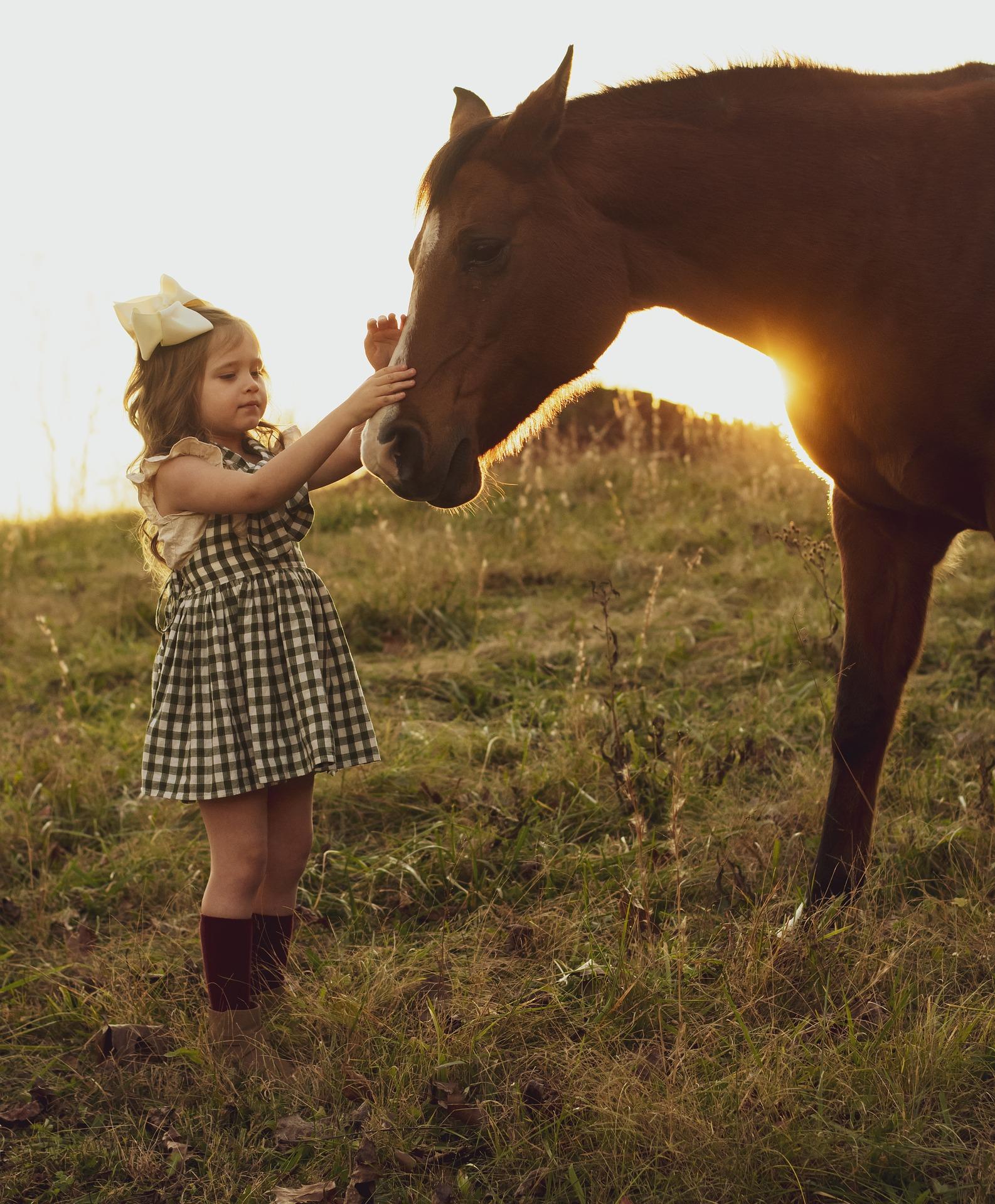 Paardentherapie